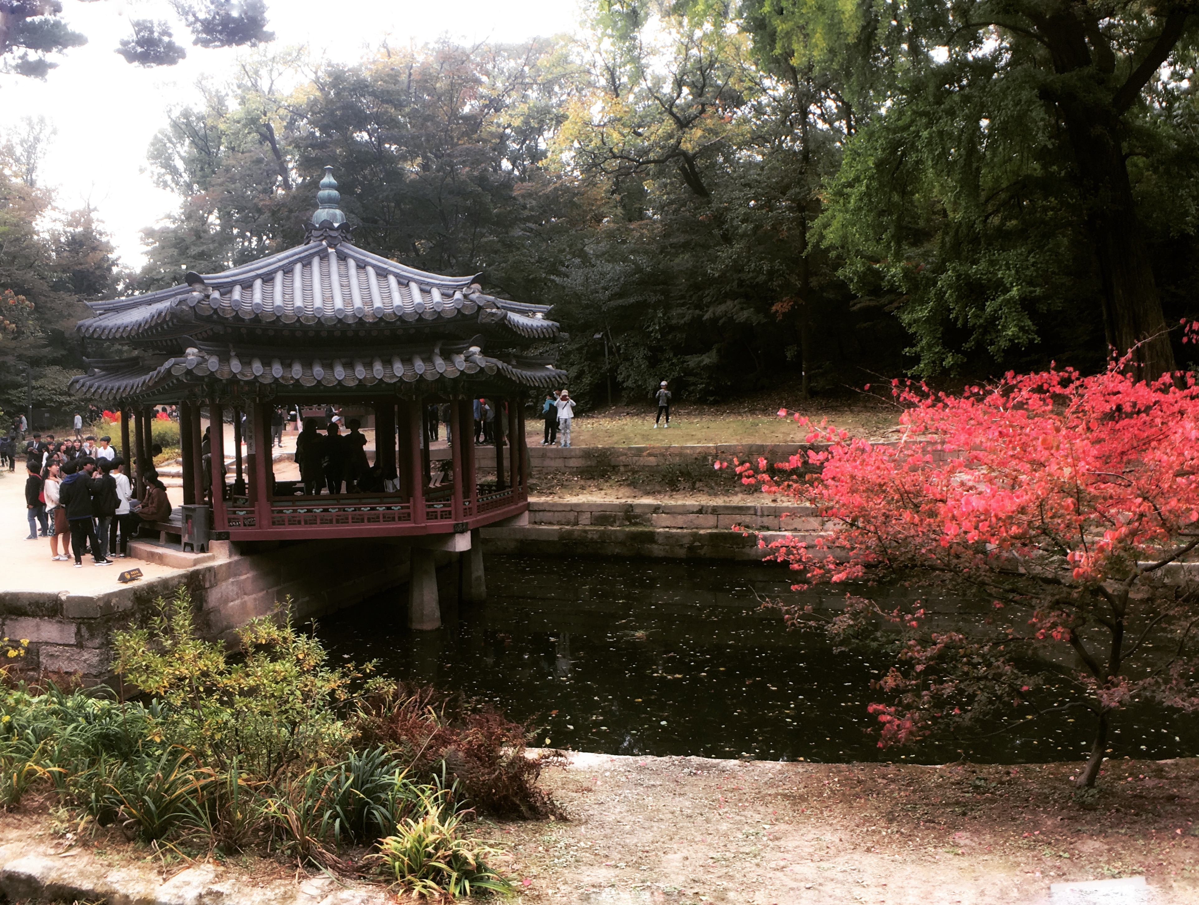 Best Time to Visit Korea - In Fall, Korea turns to a colorful canvas with yellow, red, gold and green. | www.chloestravelogue.com | #korea #fall #palace #maple