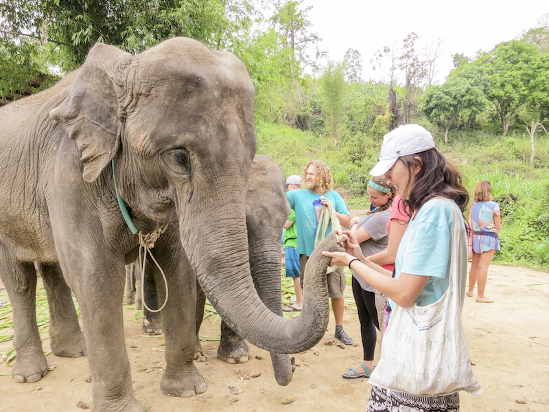 Ethical Elephant Sanctuary in Chiang Mai | Don't ride an elephant. Instead, volunteer at ethical elephant sanctuary. | www.chloestravelogue.com #Thailand #ChiangMai #elephantsanctuary #EthicalAnimalExperience #elephantbathing